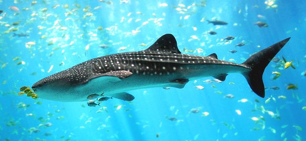 幻灯片:全球十大亟需保护的海洋生物