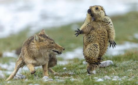 Sidebar Full Col Yongqing Bao年度最佳野生动物摄影师网站