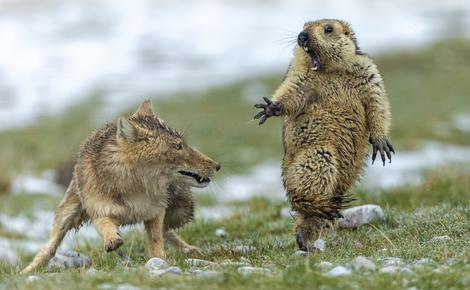 主页yongqing bao年度最佳野生动物摄影师网站