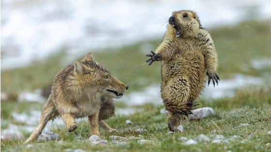 年度主要永青包野生动物摄影师网