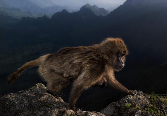 年度主要riccardo marchegiani野生动物摄影师网站
