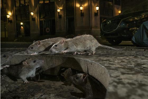 年度主要查理·汉密尔顿·詹姆斯·詹姆斯野生动物摄影网