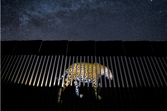 年度阿莱扬德罗·普里托主要野生动植物摄影师网站