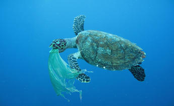 Aside p6y9fh sea turtle swallowing a plastic bag