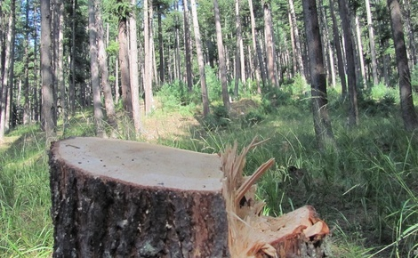 Sidebar according to some academic studies forest degradation was at its peak in some forest areas of kashmir during the armed conflict from 1989 to early 2000s credit athar parvaiz