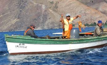 Aside isla juan fernandez  langostas lobsters meitu 1 e1521632816672 1440x918