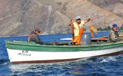 Sidebar isla juan fernandez  langostas lobsters meitu 1 e1521632816672 1440x918