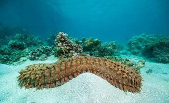 Index sea cucumber treetstreet thinkstock 1440x956
