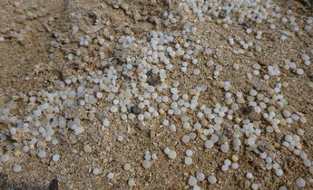 Index plastic pellets from ship wreck at beach near abu ghusun 1440x1080
