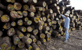 Aside 2105   chinese man looking at large stack of logs