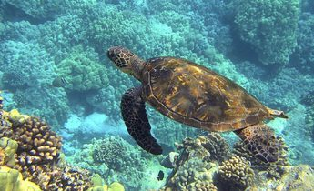 Index sea turtle 547162 1920 e1534168069327 1440x815