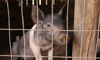 Aside piglet 677049 1280