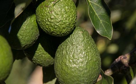 Sidebar hass avocado 2685821 1280 meitu 1