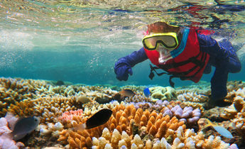 Index thinkstockphotos 610660400 child snorkeling in great barrier reef queensland australia chameleonseye 1440x838