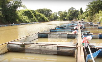 Aside fish farming along phong river meitu 3