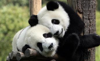 Aside 2400 china panda nation