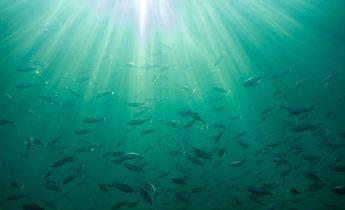 Aside sea 3225720 1920 1440x960