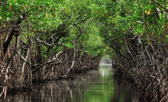 Aside thinkstockphotos 610837486 mangrove trees along the turquoise green water in the stream ballllad 1440x956