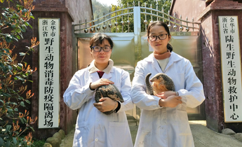 Aside staff at wildlife rescue centre along with two rescued chinese pangolins