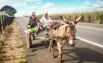 Aside donkey meat in brazil