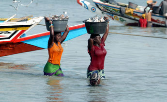 Index atjdyg women unloading the catch in tanji gambia 1440x987