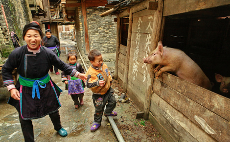 Sidebar hxrrj3 family pig in china