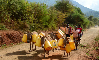 Aside hmerpm  villager transport water with donkeys meitu 1