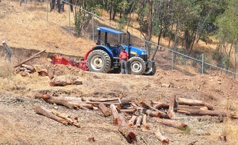 Aside mexico s illegal logging crisis