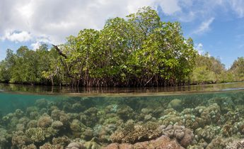 Index g4j73k mangroves in indonesia 1440x960