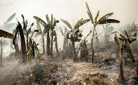 Sidebar lao banana chinadilog visarut 18 web