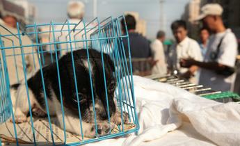 Index w00n55 a sidewalk pet market in downtown beijing web