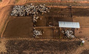 Index beef amazon deforestationdsc 2938 1