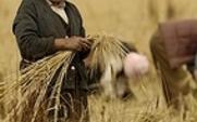 Aside tibet farming