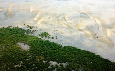 Sidebar nbs mangroves china aerial view