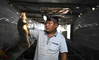 Aside coronavirus header image wuhan bushmeat wildlife market