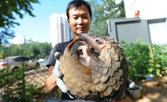 Aside podcast pangolin trade china dialogue header image