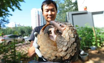 Aside podcast pangolin trade china dialogue header image