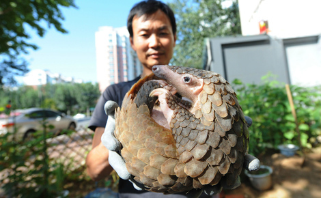 Sidebar podcast pangolin trade china dialogue header image