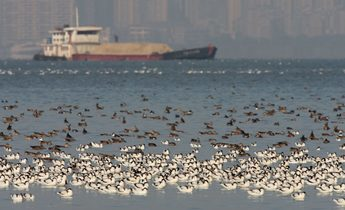 Index migratory birds in shenzhen bay 1 1440x836