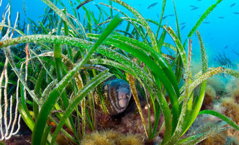 Index five takeways from eu new biodiversity strategy 2020