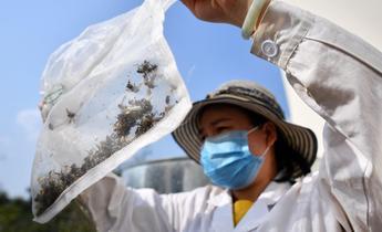 Index fall armyworm moths china