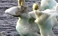 Index polar bear