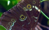 Index butterfly homepage