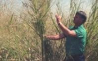 Index switchgrass