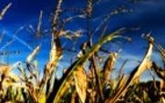 Aside corn