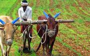 Aside indianfarmerbig