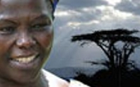 Index wangari maathai large