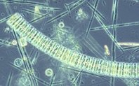 Index phytoplankton large