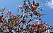 Aside_plastic_tree_large