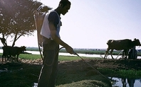 Index irrigation egypt2 large